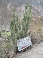 Colca Canyon-36