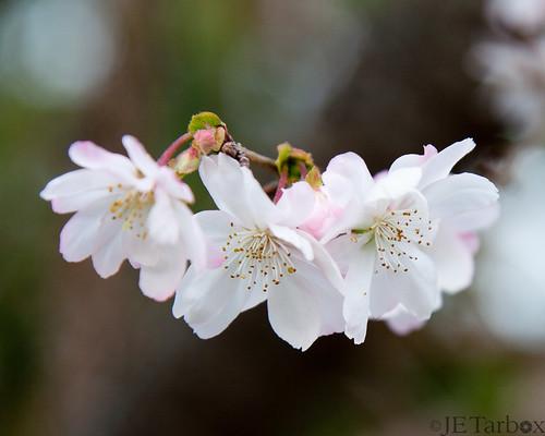 08NOV14: fall flowers