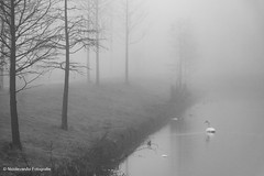20161228_nva_6086_mist_bw-web (nicolevanas) Tags: alphenaandenrijn fog koude landschap landschape mist mistig nicolevanasfotografie stedelijklandschap winter