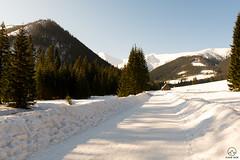 Dolina Chochołowska w zimowej aurze (czargor) Tags: tatry zachodnie winter winterinthemountains