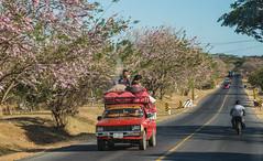 Nicaragua (matthias_oberlausitz) Tags: nicaragua starase bäume blüten mittelamerika