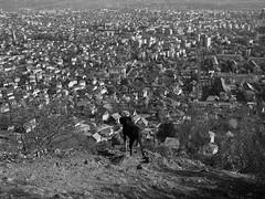 április 1 (> akela <) Tags: erdélyikopó frakk nagybánya