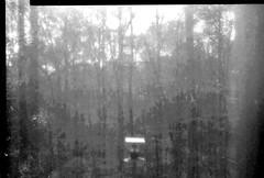 Birdfeeder and Woods  No Film No Chemicals (Neal3K) Tags: eastman2dviewcamera kodak2dviewcamera ilex3lens longexposure vcselectenlargingpaper solargraph f8 3hourexposure f11 doubleexposure