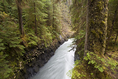 Pony Bridge trail (JR-pharma) Tags: enchanted valley trail pony bridge enchantedvalley ponybridge quinault river quinaultriver oregon or forest rainforest usa united october northwest north west automne fall 2015 states america nationalpark northwestern norwest national park roadtrip road trip photoroadtrip french français nature aventure liberty liberté canoneos5d canon5d mark 1 canon eos 5d classic jrpharma parc parcnationaux parcnational pacificnorthwest pacific hiking hike washington state wa washingtonstate olympicnationalpark olympicnp olympic