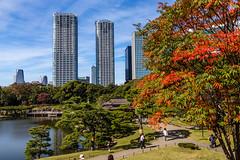 IMG_2479 (Evgeny Gorodetskiy) Tags: sunshine autumn garden landscape building travel cityscape outdoor weekend city park skyscrapper himarikiyu japan tokyo minatoku tōkyōto япония jp