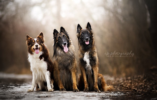 Arun, Ares and Chamu
