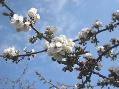 #nature#flickrnature #spring (valexclub) Tags: spring flickrnature nature