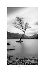 windy lake Padarn... (bevscwelsh) Tags: tree wind lonely llynpadarn snowdonia northwales fujifilmx100f