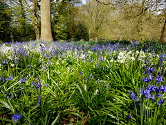 20170415_115919 (dkmcr) Tags: ruffordoldhall nationaltrust tudor heritage history lancashire daytrip attraction tourist rufford 15th april 2017 landscape scenery