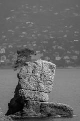 Nature in black and white (big91mogoro) Tags: nikon d3200 portofino liguria italy italia nature tree albero roccia rock sea mare
