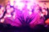 Limassol Carnival  (125) (Polis Poliviou) Tags: limassol lemesos cyprus carnival festival celebrations happiness street urban dressed mask festivity 2017 winter life cyprustheallyearroundisland cyprusinyourheart yearroundisland zypern republicofcyprus κύπροσ cipro кипър chypre קפריסין キプロス chipir chipre кіпр kipras ciprus cypr кипар cypern kypr ไซปรัส sayprus kypros ©polispoliviou2017 polispoliviou polis poliviou πολυσ πολυβιου mediterranean people choir heritage cultural limassolcarnival limassolcarnival2017 parade carnaval fun streetfestival yolo streetphotography living
