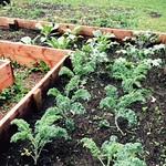 Goodwin Park Community Garden