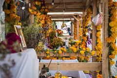 Oaxaca Day of the Dead orange flower shine
