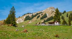 K_103  Zur Hochplatte im Karwendel (wenzelfickert) Tags: karwendelgebirge umgachenkirch christlumhochplatte tirol alpen schutzhütte bothy hütten huts wiese meadow landscape landschaft mountains berge wandern hiking österreich austria wanderweg trail