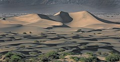 Mesquite Dunes at Sunset (Ron Wolf) Tags: deathvalleynationalpark earthscience geology geomorphology mesquitedunes nationalpark desert dune landscape nature california explore sunset