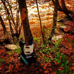 Spring Thaw (Pennan_Brae) Tags: guitars sixstring river riverside music musicphotography guitarphotography fenderguitars fenderguitar electricguitar guitar offset fendermustang fender