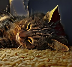 Kami (color) (GeminEye27) Tags: topazclean artisto kami cat photomanipulation
