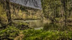 Au bord de l'eau (Fred&rique) Tags: lumixfz1000 photoshop hdr raw jura paysage nature rivière végétation vert hiver arbres fleurs