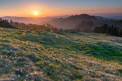Sunset - Rämisgummen (Captures.ch) Tags: ngc black blue brown clouds color crocus dusk eggiwil emmental evening flower flowers gray landscape light mountains nature orange red sky spring sunset swiss switzerland trees white yellow