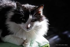 _MG_0042 Morgan (Dante Guazzo Giorgio) Tags: 2014 cumiana felini