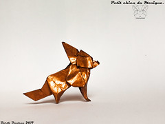 Petit chien du Mexique - Barth Dunkan (Magic Fingaz) Tags: anjing barthdunkan chien chó dog hond hund köpek origami origamidog perro pies пас пес собака หมา 개 犬 狗