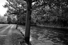 Naviglio Langosco (Località Vulpiate) (Massimo Caccia) Tags: pianura ticino piemonte galliate biancoenero monocromo bw blackandwhite canon acqua boschi