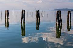 Lago Trasimeno (Cactipal) Tags: