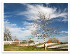 Bare Tree (bogray) Tags: autumn trees sky fall leaves fence fallcolor ky harrodsburg shakervillageofpleasanthill