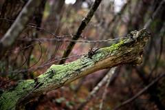 Nature breaking free