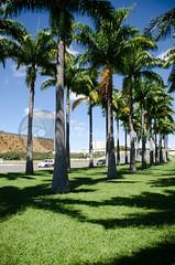 DF0014 (volkvanessa) Tags: braslia brasil natureza rvores distritofederal palmeiraimperial regiocentrooeste