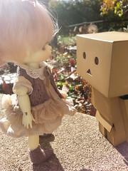 """Hello, Danbo!"" (pixachii) Tags: yellow ball doll box sunny wig opening bjd basic default jointed danbo latidoll faceup lati cardbo danboardo"