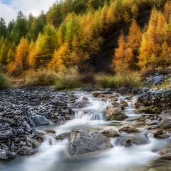 Magic in the Stream (Jacob Surland) Tags: longexposure autumn trees france water lines river landscape stream stones riverbed larch hdr highdynamicrange queyras silkywaters caughtinpixels jacobsurland