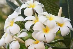 Flora in Sri Lanka