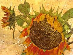 Sunburnt (Dazzygidds) Tags: detail texture leaves gorgeous details sunflower nationaltrust sunburnt warwickshire