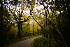 Pinhole (Shadows vines) Tags: trees tree nature yellow forest 35mm nikon pinhole national cherokee wander d800