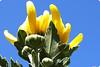 "Chrysanthemum (karakutaia) Tags: sun tree love nature japan paper temple japanese tokyo heart superb card e simply sogno rockpaper afotando ""flickraward"" flickrglobal elementsorganizer allbeautifulshotsandmanymoreilovenature flowerstampblackandwhite transeguzkilorestreetarturbanagreatshotthisisexcellentcontestmovementricohgxr""serendipitygroupbluenatureicapture flickraward5""j tra realtabstract"