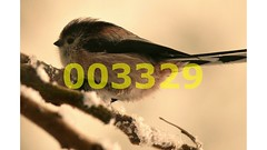 Flickr_003329 (lima_ho_htc) Tags: birds tit gardenbirds franbanks rememberthatmomentlevel4 rememberthatmomentlevel1 rememberthatmomentlevel2 rememberthatmomentlevel3 rememberthatmomentlevel9 rememberthatmomentlevel5 rememberthatmomentlevel6 rememberthatmomentlevel10