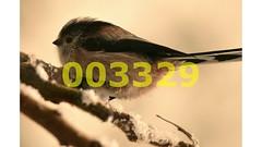 Flickr_003329 (lima_ho_htc) Tags: birds tit gardenbirds franbanks rememberthatmomentlevel4 rememberthatmomentlevel1 rememberthatmomentlevel2 rememberthatmomentlevel3 rememberthatmomentlevel9 rememberthatmomentlevel5 rememberthatmomentlevel6 rememberthatmomentlevel10