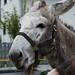 DSC_0227 - Du Esel - kein Schimpfwort!