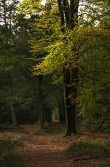Autumn colors start to appear (Mark Meijrink) Tags: autumn holland forest woodland mushrooms nationalpark woods herfst nederland autumnleaves autumncolors recreation bos kastanjes dieren eerbeek veluwe veluwezoom herfstkleuren paddestoelen herfstwandeling gelderland kastanje walkinthewoods nationaalpark nationalparkveluwezoom recreatie autumnwalk forestleaves kastanjeszoeken deciduouswoodland laagsoeren loofbos nationaalveluweparkveluwezoom