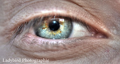 Sweet look (ladybird13420) Tags: blue iris macro eye nikon sweet oeil bleu hdr doux d5100 afs60microg