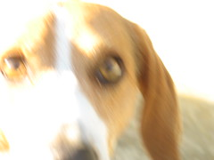 Sudden appearance (beneventi2013) Tags: dogs cani canonpowershota610 paolobeneventi