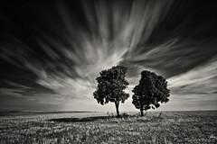 Encina Zen (Paco Fuentes Vicario) Tags: bw blancoynegro arbol arboles ngc viento minimal nubes campo cosecha soledad dual simple zamora horizonte castilla simetria encina castillayleón simetrico largaexposición skancheli