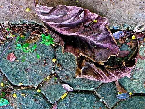 leaves down by the river, chiang mai
