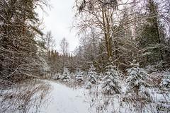 Joensuu - Finland (Sami Niemeläinen (instagram: santtujns)) Tags: winter lake snow ice nature forest suomi finland north scandinavia northern lumi talvi metsä joensuu luonto järvi jää karjala pyhäselkä kuhasalo carelia pohjois
