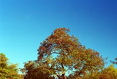 Arnold Arboretum - Boston, Ma (Cape made 13) Tags: park city fall film nature boston 35mm canon outside eos rebel 50mm prime gold iso200 2000 autum kodak 200 polarized expired foresthills