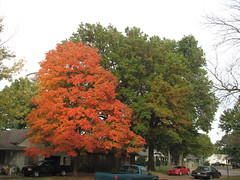 2014 Fall Scenery (tomcomjr) Tags: blue red green fall leaves yellow gold canonpowershots3is