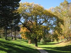 Tree (laedri52) Tags: park tree nebraska omaha hazan aa sonbahar gz
