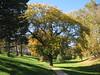 Tree (laedri52) Tags: park tree nebraska omaha hazan ağaç sonbahar güz