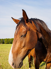 Brown horse closeup portrait (frank.hoekzema) Tags: ranch blue wild portrait sky horse pet brown eye nature colors beauty smile face animal animals sport closeup hair neck mammal happy weird big funny long close head farm stripe meadow ears riding nostril transportation western strong isolation amusing breed livestock stable equestrian isolated saddle mane horsepower domesticated forelock